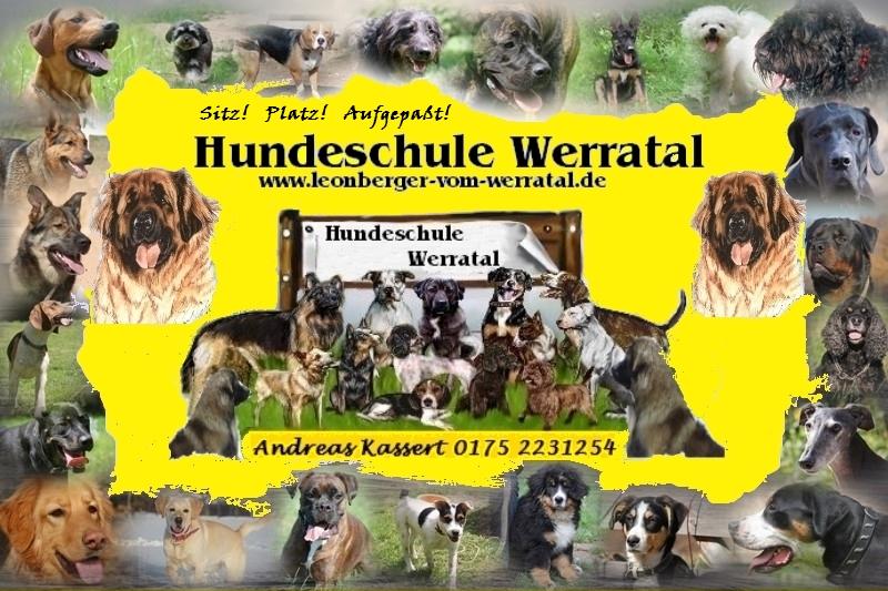 Hundeschule Hunde Banner